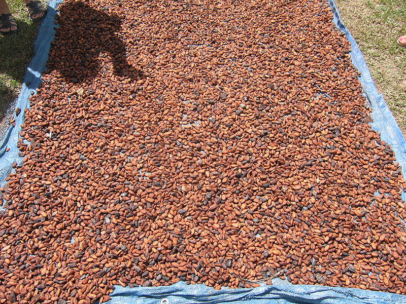 Chocolate origins: Peru