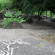 I went back to the Petroglyphs of Polish a few days ago. It was a slightly odd experience because the man who looks after the place seemed to be talking […]