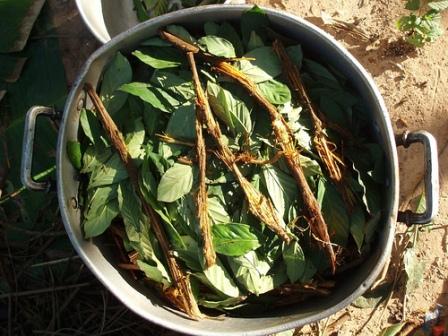 preparation-ayahuasca-chakruna