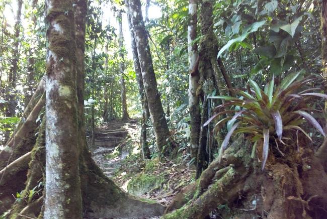 Cerro Verde trail