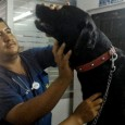 This is Dr. Milter Rojas García with my dog Max. If it wasn't for Dr. Rojas and the rest of his staff at Clínica Veterinaria Rojas in Tarapoto, Peru, I […]