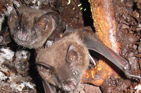 Man vs. Bat