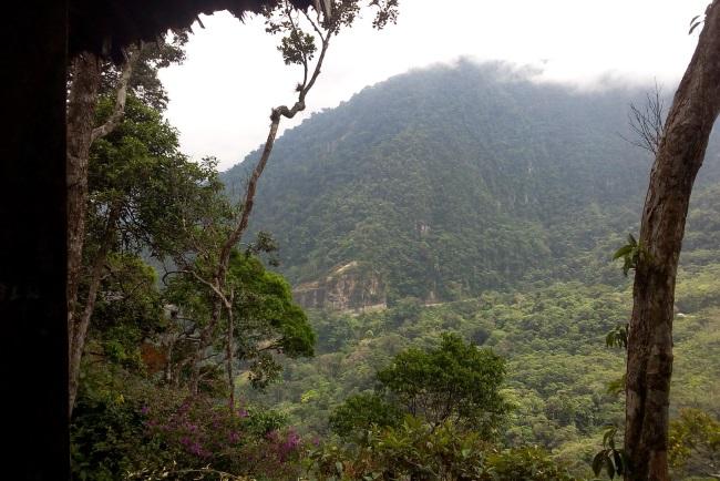 The Asociación Ecológica Cerro Verde, A Nature Reserve in Tarapoto