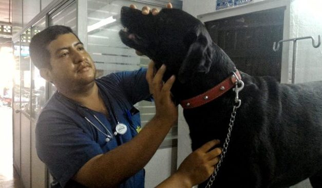 The Best Vet in Tarapoto, Peru